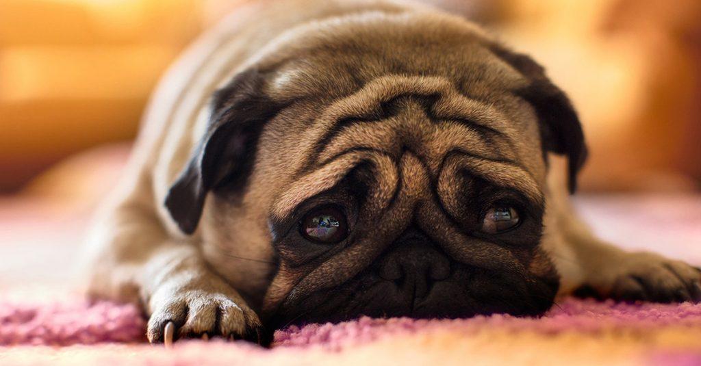 dog sad alone