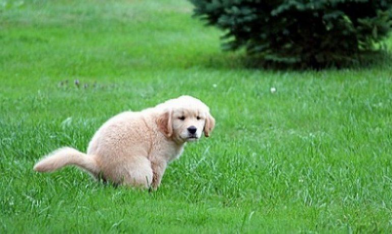 dogs diarrhea