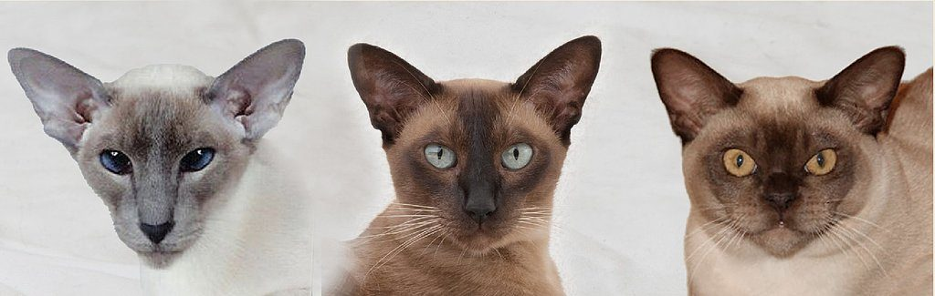 tonkines cat 4