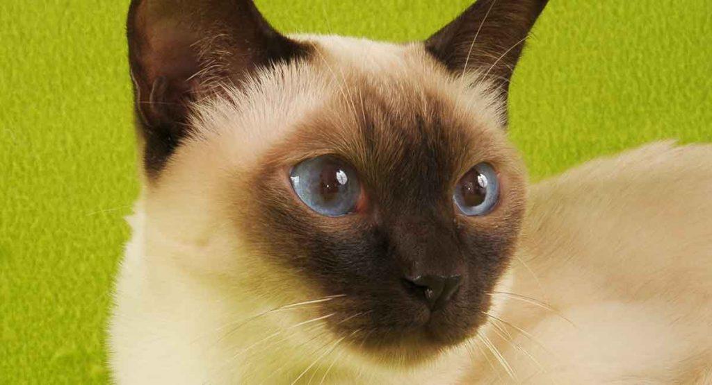 tonkines cat 6