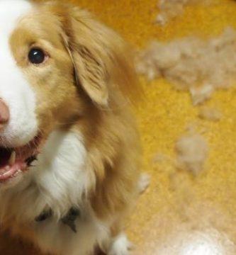 dog-loses-hair